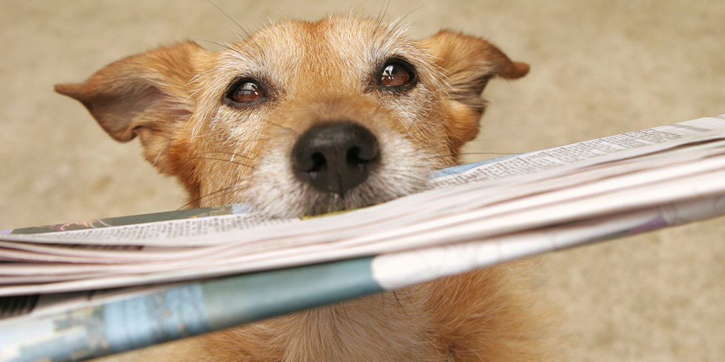 News header - Dog and paper  EDITED